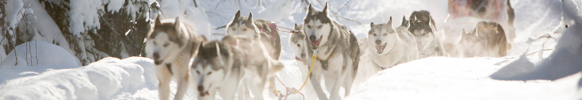 Mushing - Andorre